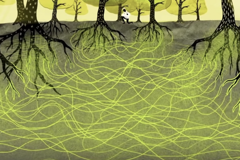 Collaboration in the Wood-Wide Web